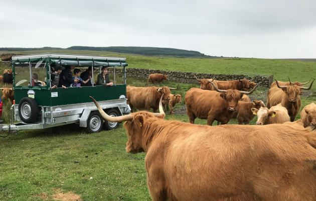 People in trailer among the coos